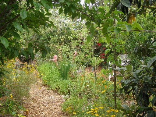 A Community Forest Garden for Stanton Heights